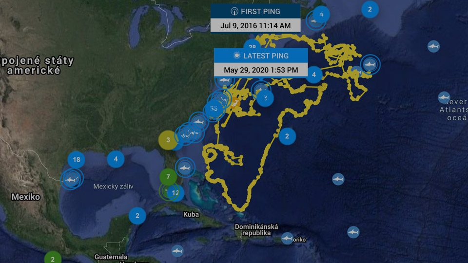 map-usa-shark-tracking-animal-track